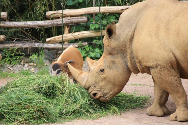 Frau pferd zoo